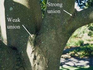 branches unions